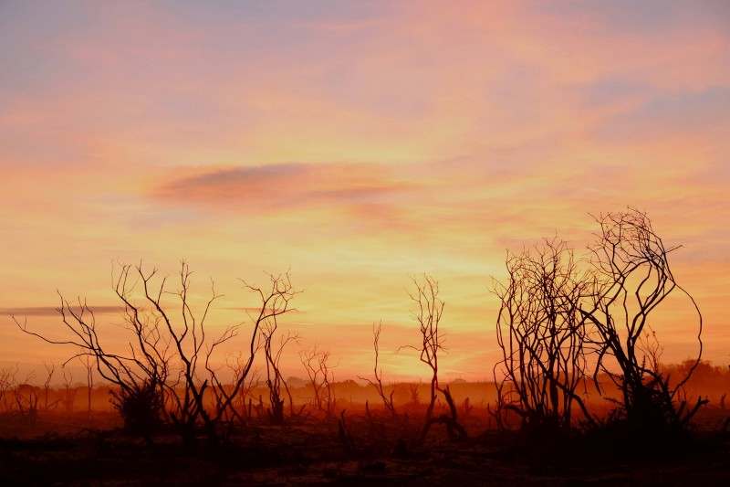 sunset, silhouette, twigs, new forest orange, pink, red, photo, photograph,