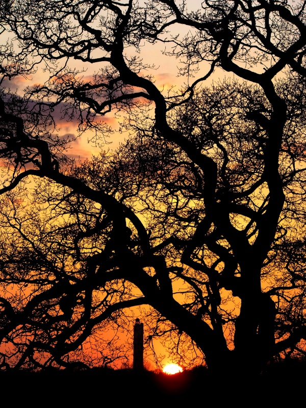 sway, sway tower, folly, lymington, sunset, red, silhouette, photo, photograph, tree,