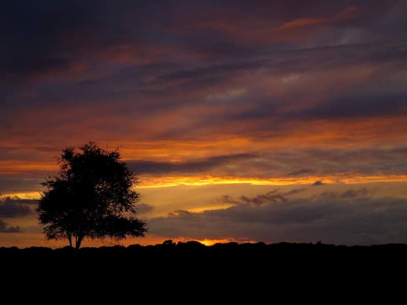 new forest, tree, sunset, silhouette, red, black, photo, photograph,