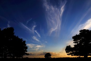 clouds, trees, new forest, silhouette, sunset, blue sky, photo, photography, photograph,